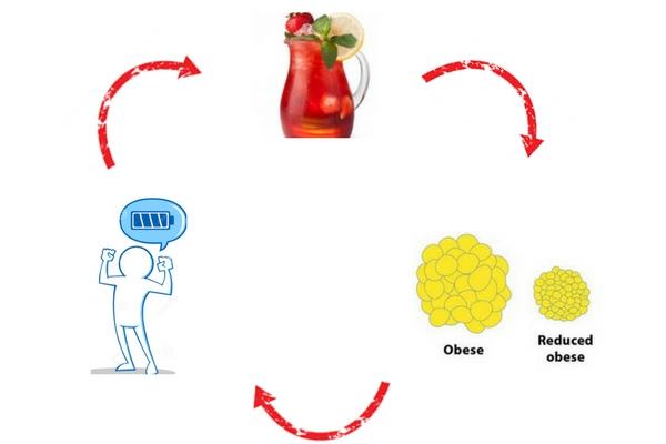 Red Tea Detox Reviews